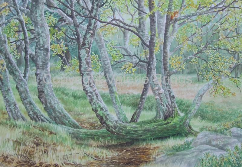 Birches Lichens and Bog Myrtle Watercolour Image Size 550 x 740 mm