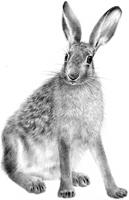Brown-Hare-SOLD