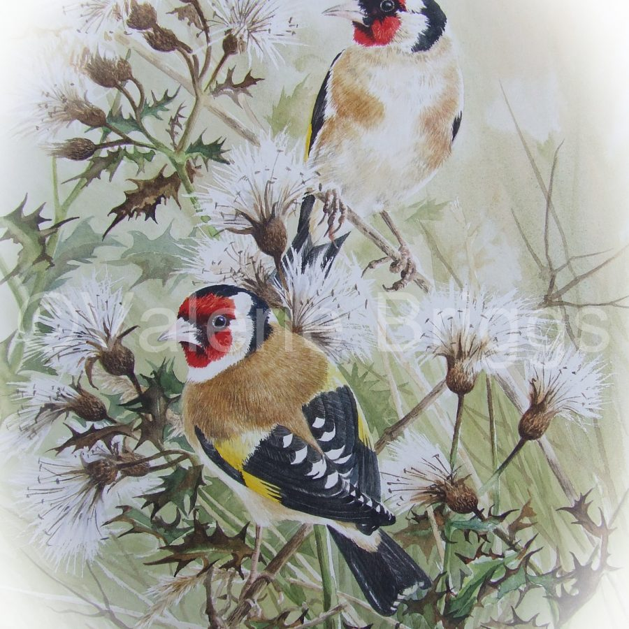 Goldfinch 2 Day Sandpiper Studio - http://www.thesandpiperstudio.co.uk/ Workshop Friday 30th April and Saturday 1st May 2021