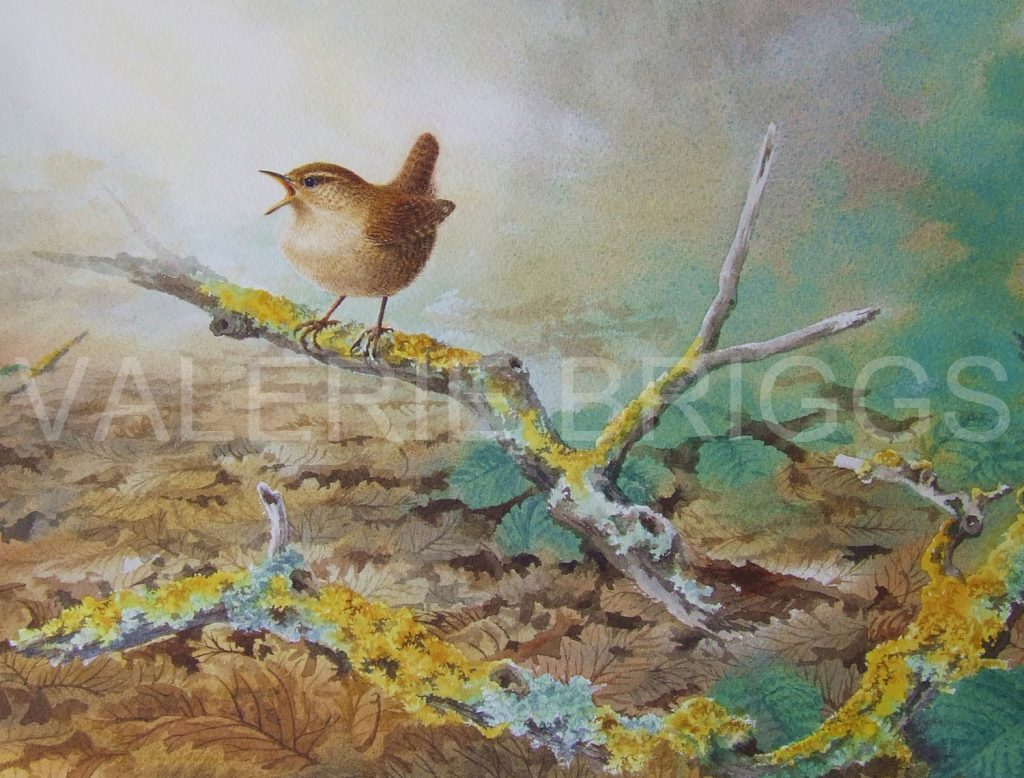 Little King of the Wood by Valerie Briggs Wildlife Artist