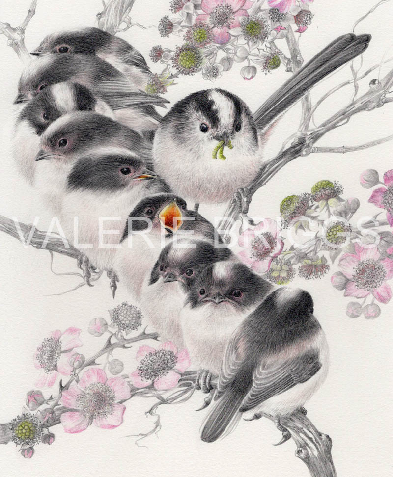 Long Tailed Tit Family by Valerie Briggs