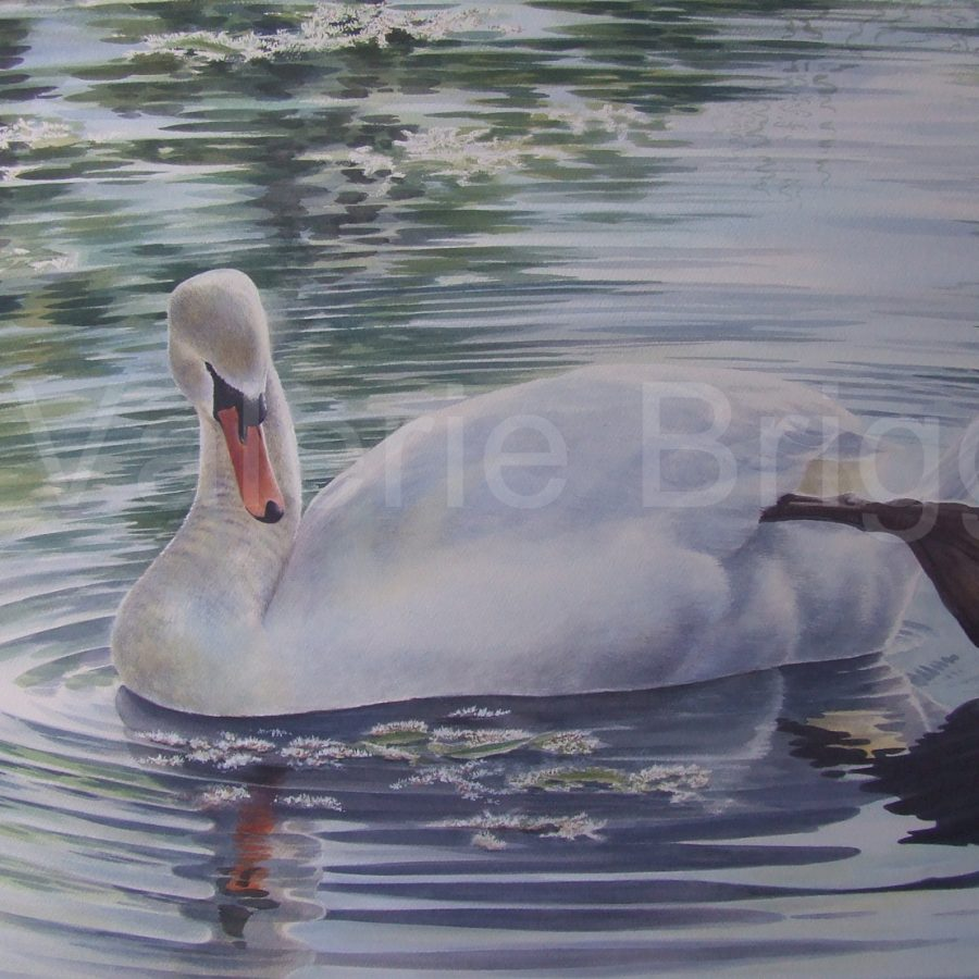 Serene Under the Willows Watercolour Image Size 690 x 540 mm by Valerie Briggs