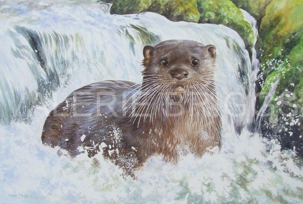 Startled Otter by Valerie Briggs Wildlife Artist