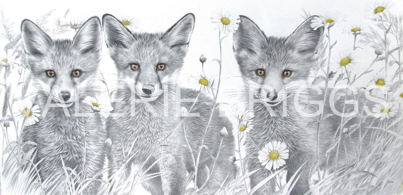 Little Foxes Sold by Valerie Briggss