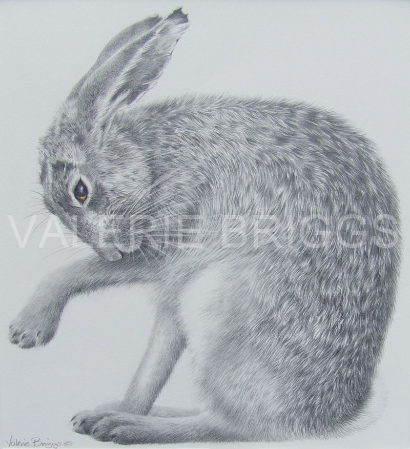Valerie Briggs Not a Hare out of place