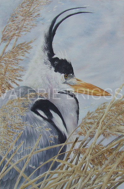 Wind in the Reeds Image size 53 x 34 Watercolour