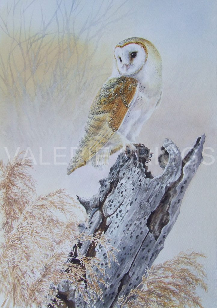 Winter Beauty by Valerie Briggs
