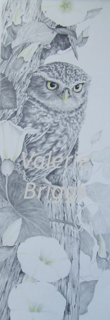 The Hideout by Valerie Briggs Graphite and coloured pencils 66 x 26 cms