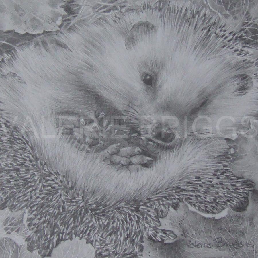 Happy Hedgehog 2015 by Valerie Briggs
